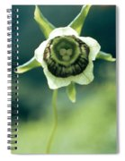 Roundleaf Asiabell Spiral Notebook