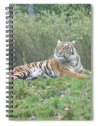 Royal Bengal Tiger Spiral Notebook