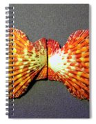 Royal Cloak Scallop Seashell  Spiral Notebook