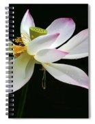 Royal Lotus Spiral Notebook