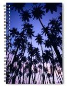 Royal Palm Grove Spiral Notebook