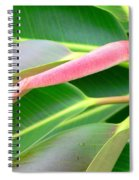 Rubber Tree - New Leaf Spiral Notebook