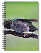 Rubbing Its Bill - Ruby-throated Hummingbird Spiral Notebook