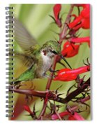 Ruby And Scarlet Spiral Notebook
