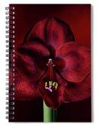 Ruby Red Amaryllis Spiral Notebook