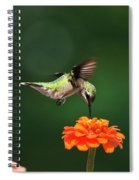 Ruby Throated Hummingbird Feeding On Orange Zinnia Flower Spiral Notebook