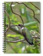 Ruby-throated Hummingbird - Female Spiral Notebook
