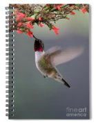 Ruby Throated Hummingbird Spiral Notebook