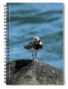 Ruddy Turnstone 2 Spiral Notebook