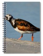 Ruddy Turnstone Spiral Notebook