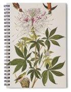 Ruff-necked Hummingbird Spiral Notebook