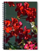 Rufus Humming Bird At Sunrise  Spiral Notebook