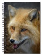 Russian Red Fox Spiral Notebook