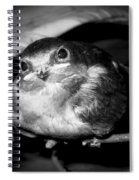 Rusted Perch - Baby Barn Swallow  Spiral Notebook