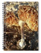 Rusty Ribbons Spiral Notebook