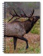 Rutting Bull Spiral Notebook