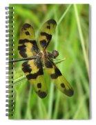 Ryothemis Dragonfly Spiral Notebook