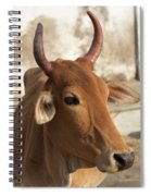 Sacred Cow Spiral Notebook