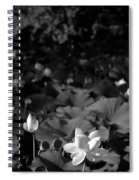 Sacred Lotus #2.    Black And White Spiral Notebook
