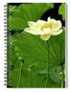 Sacred Lotus In Black Frame Spiral Notebook