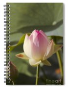 Sacred Lotus - Nelumbo Spiral Notebook