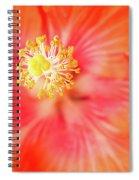 Sacred Song Spiral Notebook