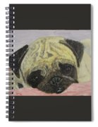 Snugly  Pug Spiral Notebook