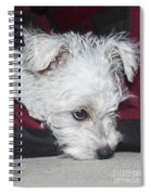 Sad Puppy Spiral Notebook