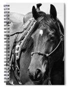 Saddled To Go Spiral Notebook