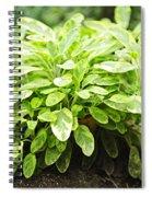Sage Plant Spiral Notebook