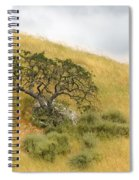 Sage Under Oak Spiral Notebook