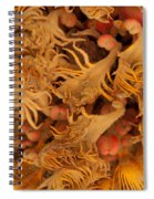 Sago Seeds Spiral Notebook