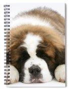 Saint Bernard Puppy Sleeping Spiral Notebook