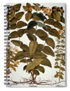 Saint-johns-wort, 1613 Spiral Notebook