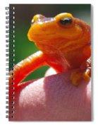 Salamander Spiral Notebook