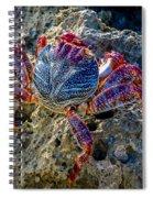 Sally Lightfoot Crab 1 Spiral Notebook