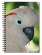 Salmon Crested Moluccan Cockatoo Spiral Notebook