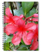 Salmon Pink In The Tropics Spiral Notebook