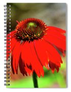 Salsa Red Coneflower Spiral Notebook