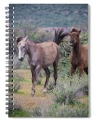 Salt River Wild Horses-img_747217 Spiral Notebook