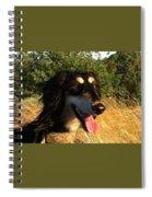 Saluki Huntress Spiral Notebook