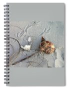 Sand And Shells Spiral Notebook