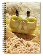Sand Crab Spiral Notebook