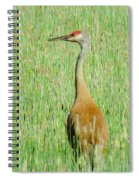 Sand Hill Crane Spiral Notebook