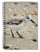 Sanderling Spiral Notebook