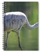 Sandhill And Green Pond Spiral Notebook