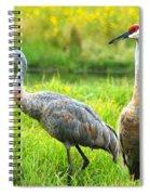 Sandhill Crains Spiral Notebook