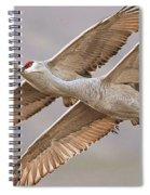 Sandhill Crane 11 Spiral Notebook