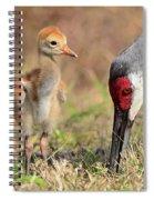 Sandhill Crane 13 Spiral Notebook
