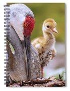 Sandhill Crane 3 Spiral Notebook